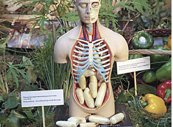imagen torso y verduras