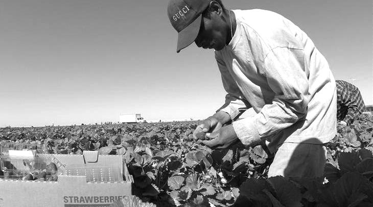 Esclavos del desierto mexicano
