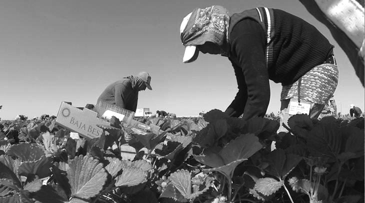 Jornaleros esclavos en el desierto mexicano