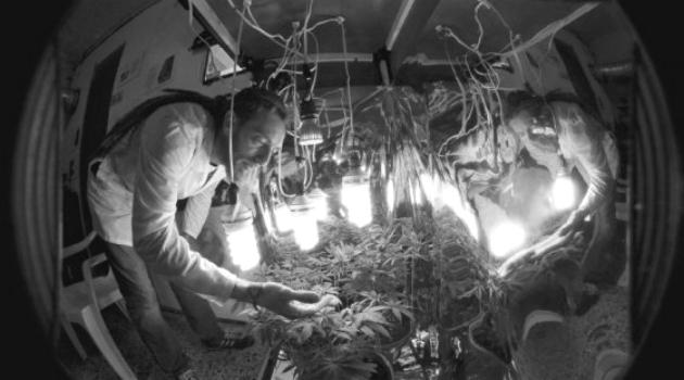 granja de marihuana