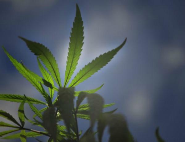 Marihuana -camila chaia 2