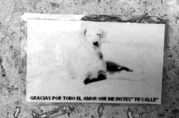 Femicidio Perro