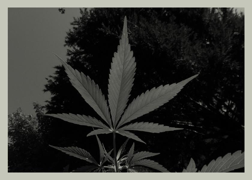 cannabis-medicinal