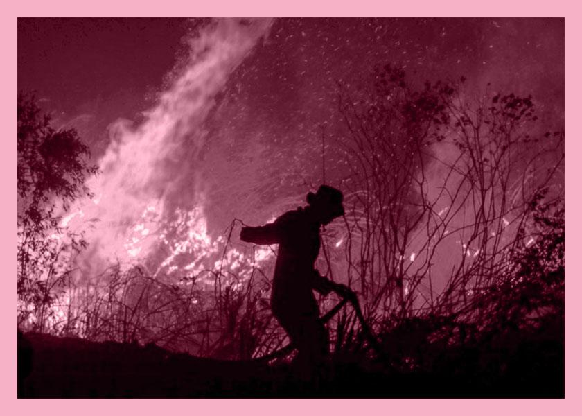 Córdoba en llamas: rescatan árboles nativos para que no se extingan