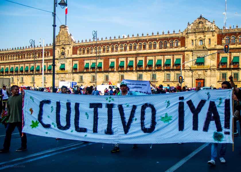 Movimiento cannábico Mexicano