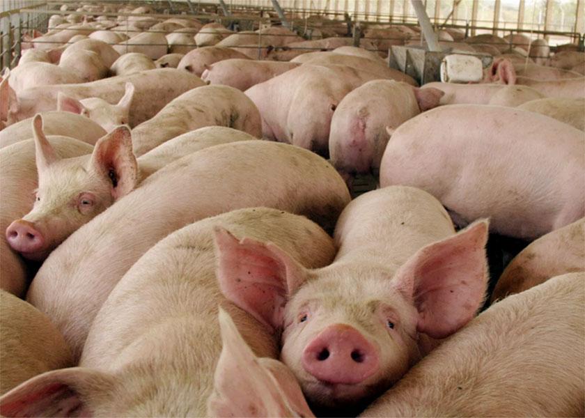 Las claves del acuerdo porcino con China: ¿qué sabemos hasta ahora?